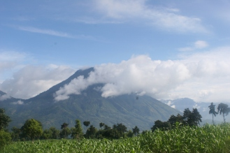 Corn fields; Guatemala.
