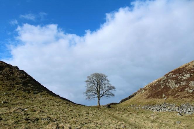Sycamore Gap, Steel Rigg, Hadrian's Wall; Carlisle, England.