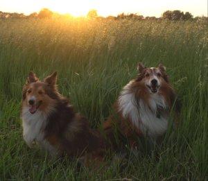 Buddy and Kiera field light