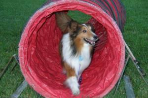 Buddy tunnel