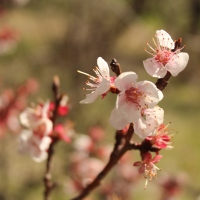 Photo Essay: Spring Blossoms